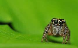 Los «bugs» del español